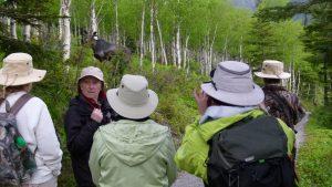 Parc national de la Gaspésie – Observation de l'orignal